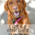5 Things to do to Prepare Your Pup for Summer