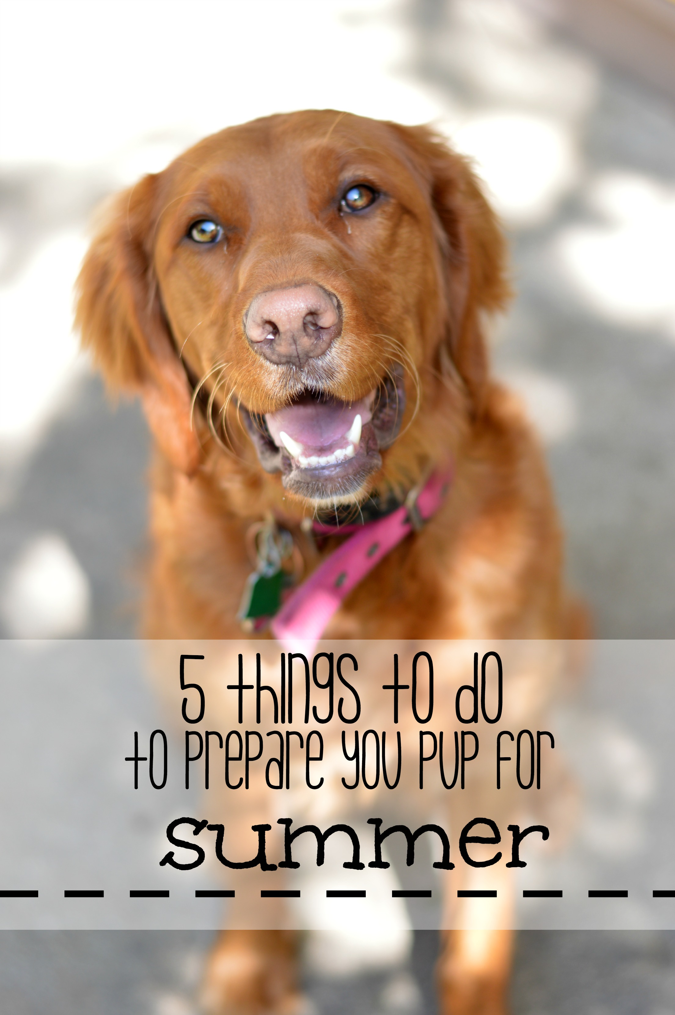 5 things to do to prepare your pup for summer! Be sure your dog is being checked for ticks, on heartworm meds and having the pads on their paws checked! // Life with Rosie