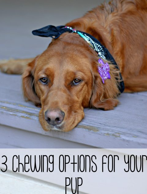 3 Chewing Options for your pup! Say no to rawhides and use these options instead to keep your dog happy, healthy and chewing all day long // Life with Rosie