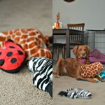 Rosie's 5 Favorite Pup Products