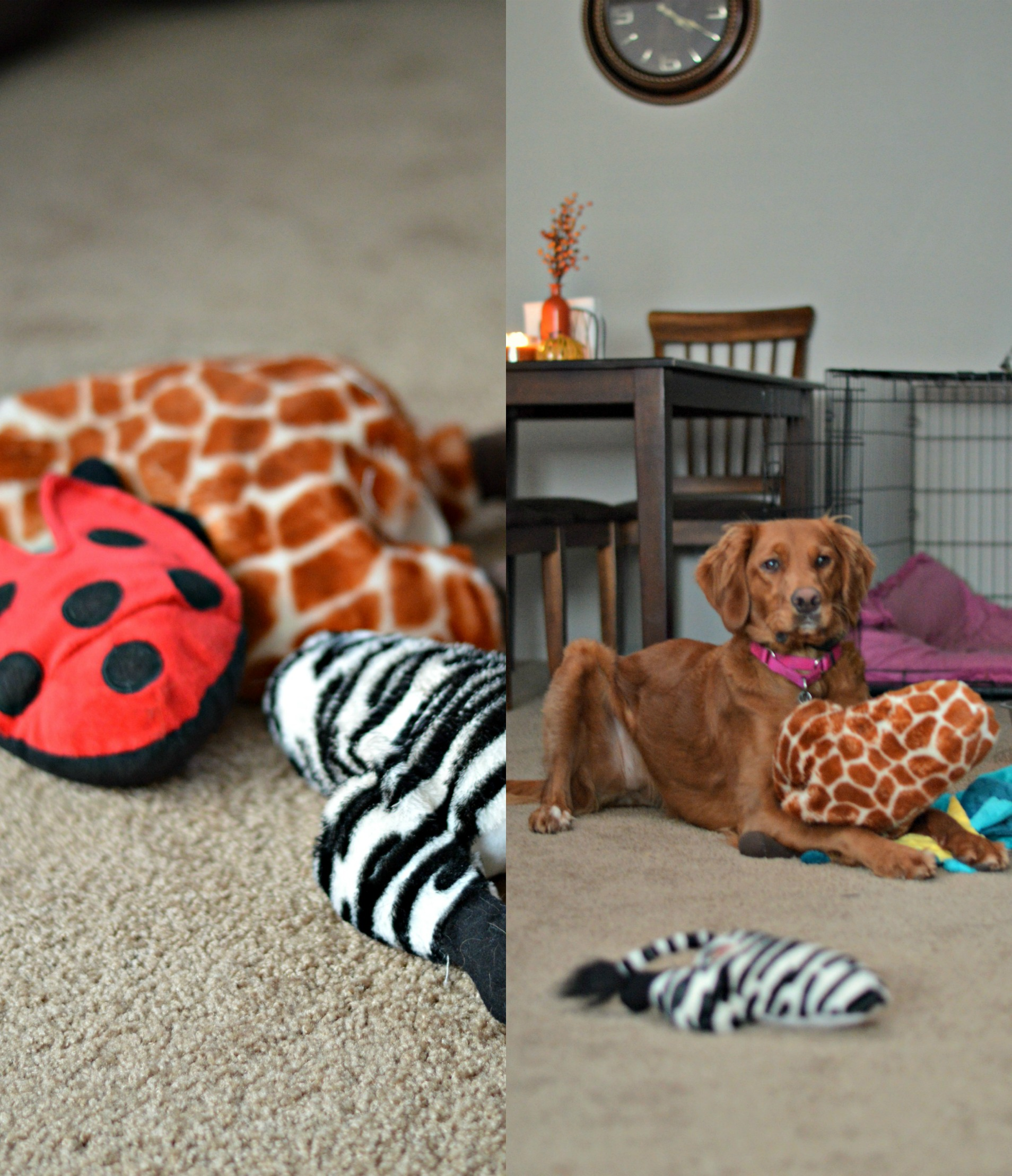 Rosie's 5 Favorite Pup Products // Life with Rosie