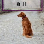 How a Dog Changed My Life