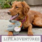 Life, Adventures & Rosie: Volume One