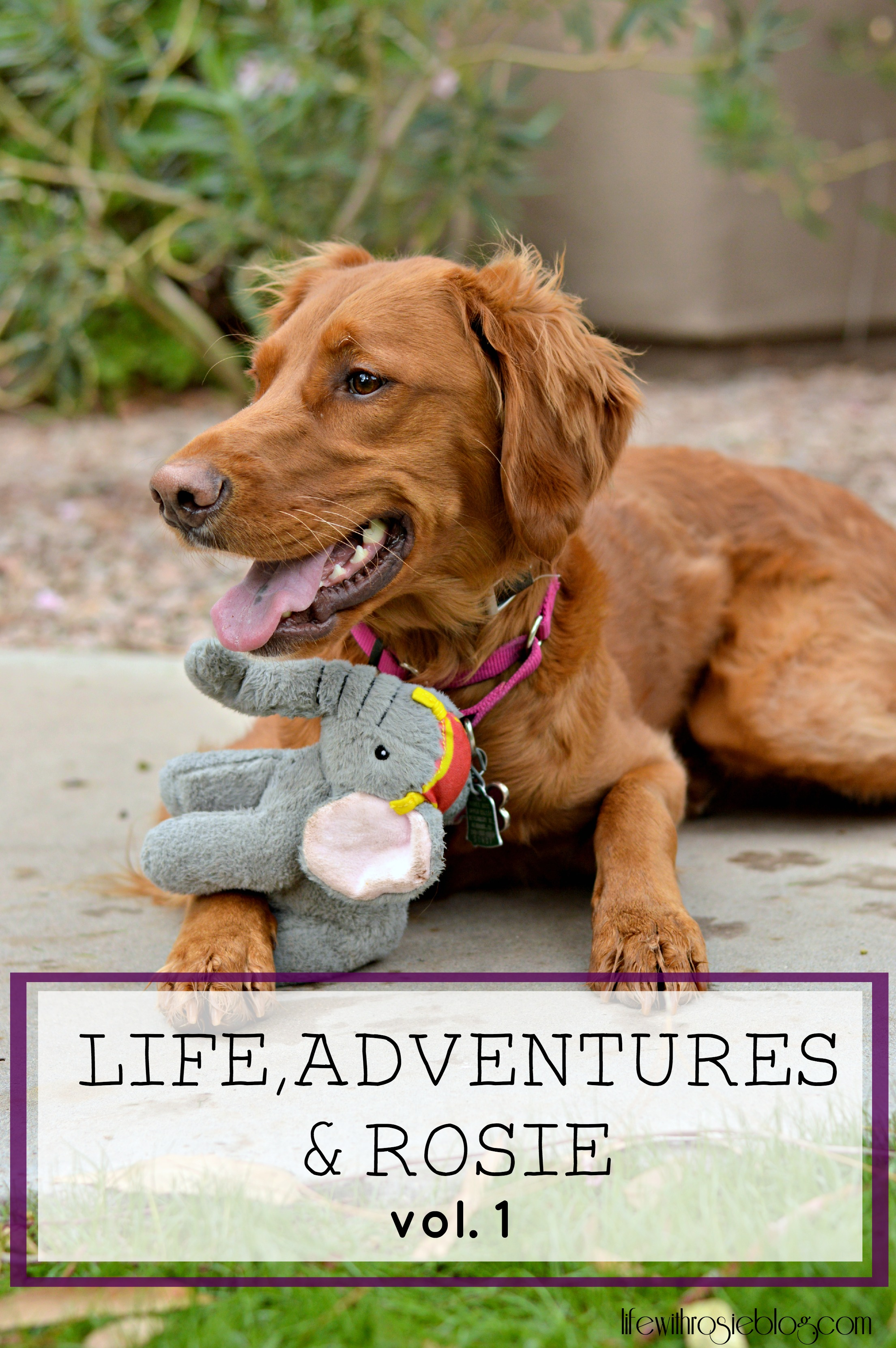 Life, Adventures & Rosie Vol 1 // Life with Rosie