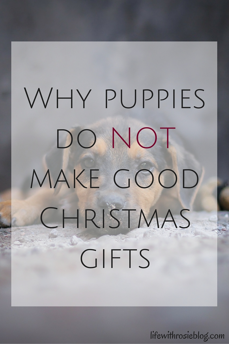 Why Puppies do NOT make good Christmas Gifts // Life with Rosie