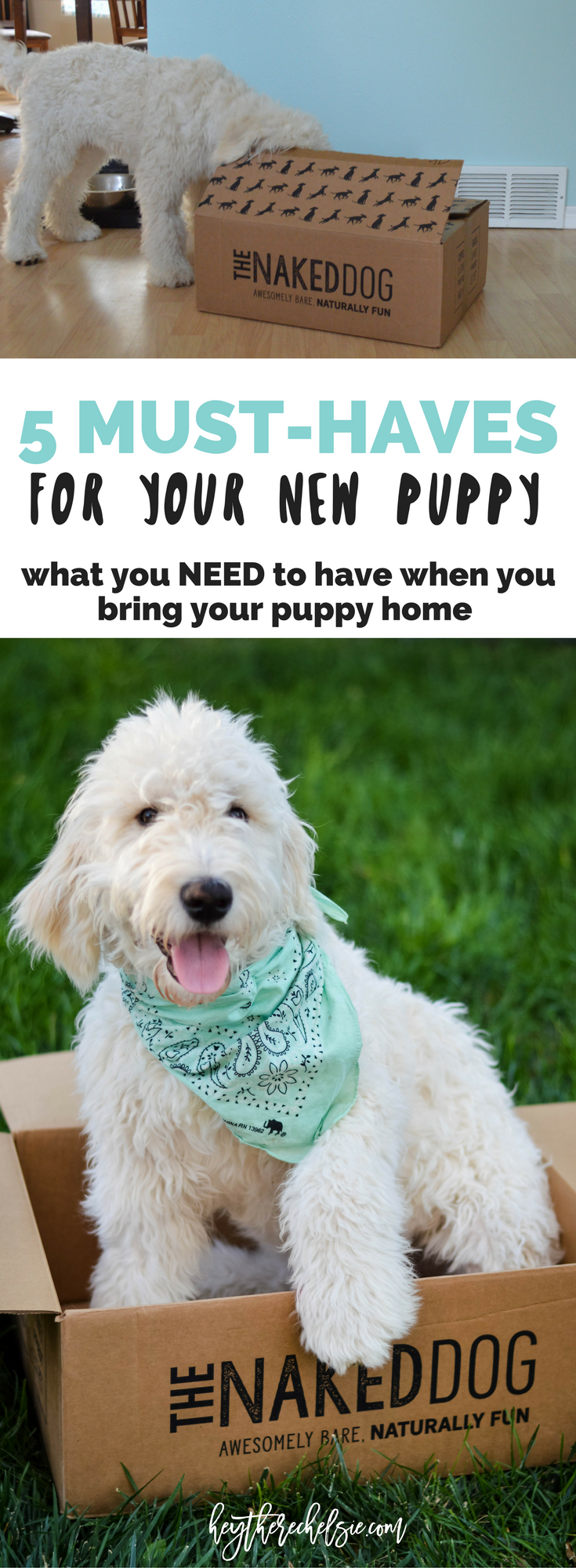 5 Must-Haves for your New Puppy featuring The Naked Dog Box // Hey There, Chelsie