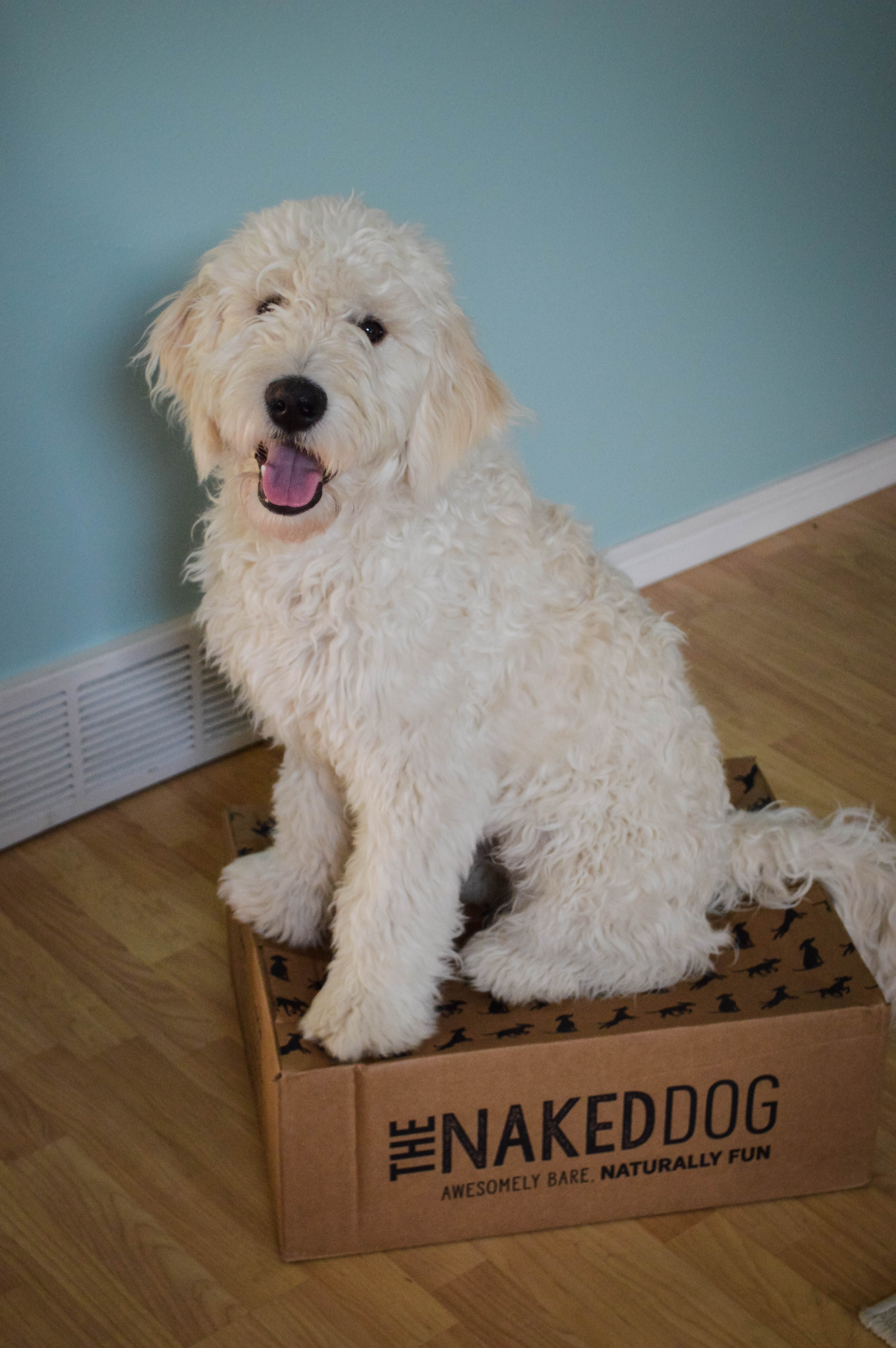 The Naked Dog Box review - 5 must-have items for your new puppy, including this amazing puppy kibble brand // Hey There, Chelsie