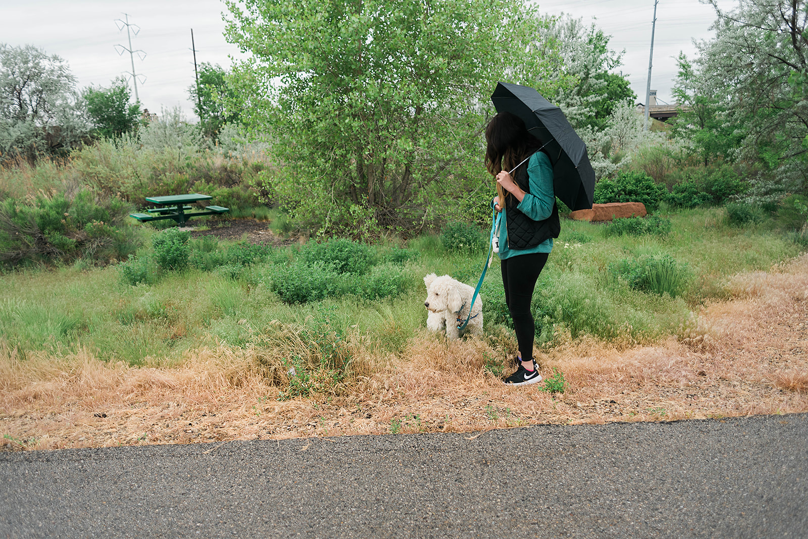 15 Summer Activities to do with your Dog // Hey There, Chelsie - A Salt Lake City Lifestyle Blog