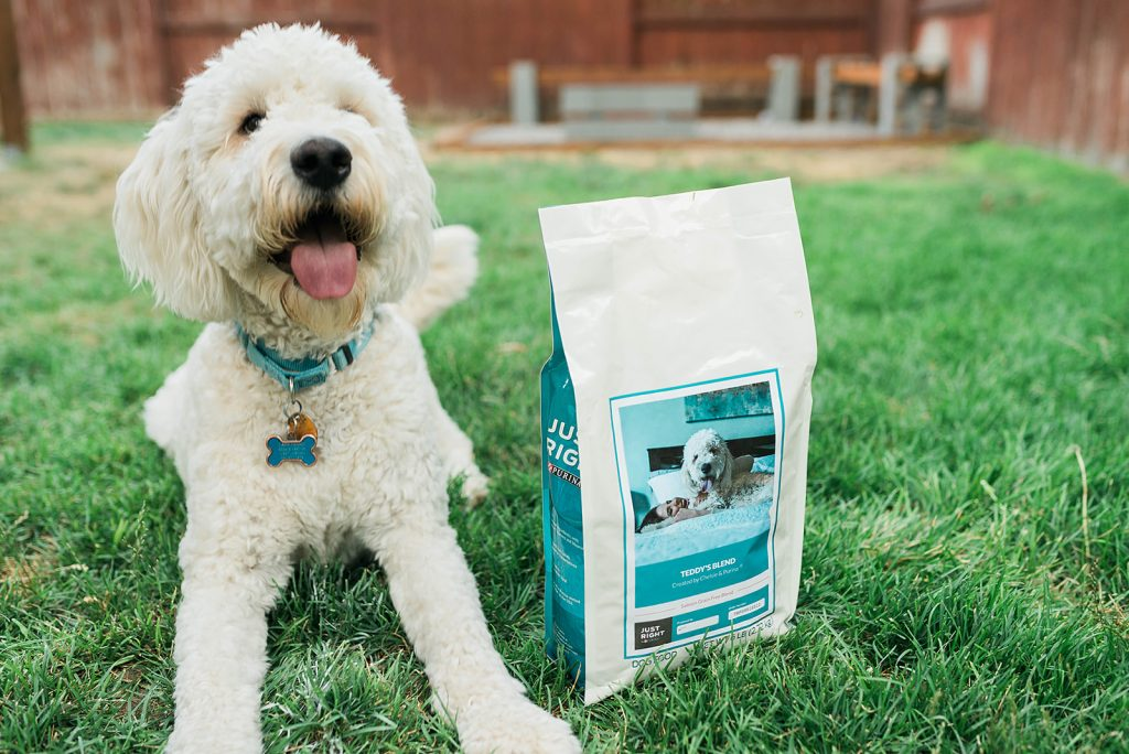 How my Dog Helped me Heal from Miscarriage = Just Right by Purina Review // Hey There, Chelsie - a Utah Lifestyle Blog