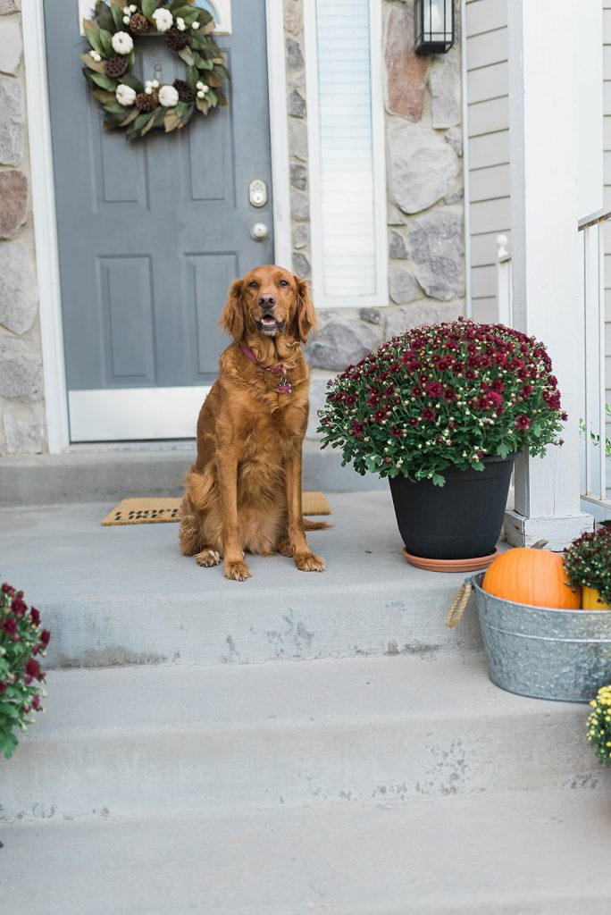 How to Decorate Your Porch for Fall with Mums. Easy and Affordable Fall Porch Decorations // Hey There, Chelsie