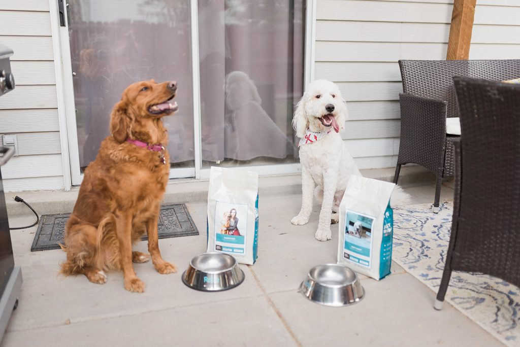 Easy Romesco Sauce recipe for chicken and fish // Hey There, Chelsie - personalized dog food by Just Right by Purina