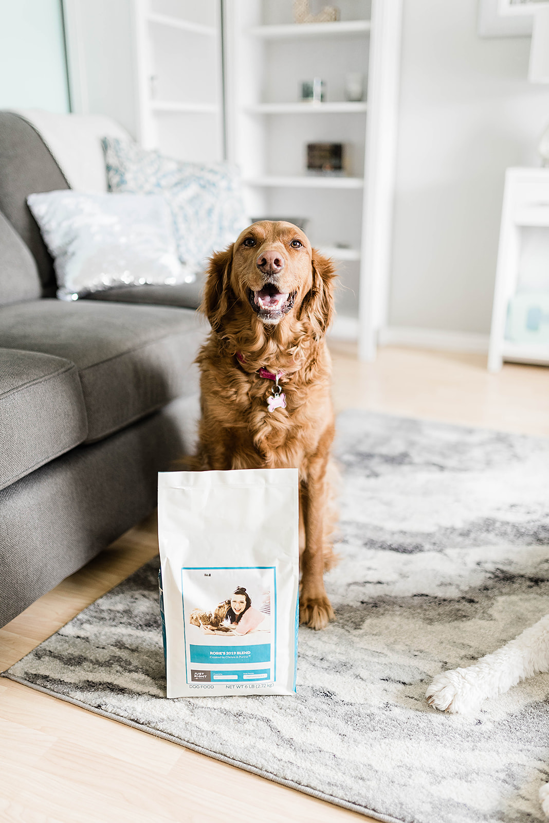 A Year on Just Right by Purina | Personalized Dog Food