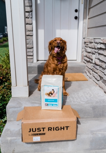 Why Personalized Dog Food Matters
