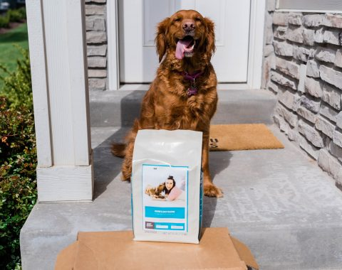 Why Personalized Dog Food Matters // Hey There, Chelsie